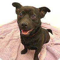 Adopt A Pet :: Oscar - Mocksville, NC