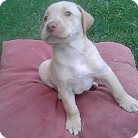 Adopt A Pet :: CODY - Irvine, CA