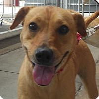 Adopt A Pet :: Tilly - Phoenix, AZ