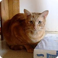 Adopt A Pet :: Little Red - Nolensville, TN