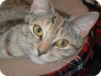 Domestic Shorthair Cat for adoption in Stafford, Virginia - Mamma Kitty