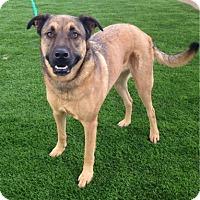 Shepherd (Unknown Type)/Labrador Retriever Mix Dog for adoption in Temecula, California - Miska