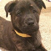 Adopt A Pet :: Dachsie - Mission Viejo, CA