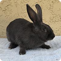 Adopt A Pet :: Violet - Bonita, CA