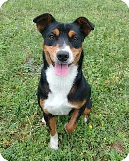 Terrier (Unknown Type, Medium) Mix Dog for adoption in Tyler, Texas - Princess