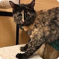 Adopt A Pet :: Jasmine - Barrington Hills, IL