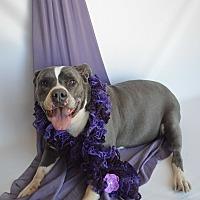 Adopt A Pet :: Marnie - Aurora, CO