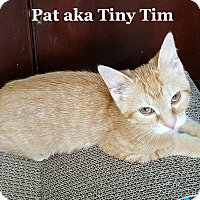 Adopt A Pet :: Tiny Tim - Bentonville, AR