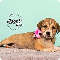 Adopt A Pet :: Leilani - Cincinnati, OH