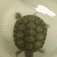 Adopt A Pet :: A1692615 - Los Angeles, CA
