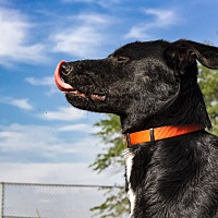Adopt A Pet :: Rogue - Warner Robins, GA