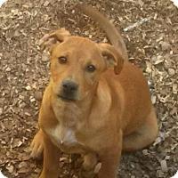 Adopt A Pet :: Daniel - Allentown, PA