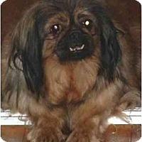 Adopt A Pet :: Aces - Mays Landing, NJ