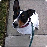 Adopt A Pet :: Precious - Rancho Cordova, CA