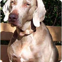 Adopt A Pet :: Bali *Courtesy Posting* - Eustis, FL