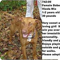 Adopt A Pet :: # 742-09 - ADOPTED! - Zanesville, OH