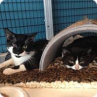 Adopt A Pet :: Crumpet & Biscuit - Deerfield Beach, FL