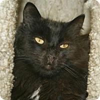 Adopt A Pet :: Chance - Mountain Center, CA