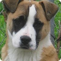 Adopt A Pet :: Erin - ADOPTION PENDING - Harrisburgh, PA
