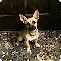 Adopt A Pet :: Millie - Weatherford, TX