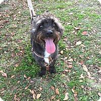 Adopt A Pet :: Brady - San Antonio, TX