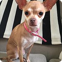 Adopt A Pet :: Suzi (Bonded with Skylar) - Lisbon, IA