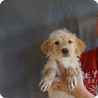 Adopt A Pet :: Zz - Oviedo, FL