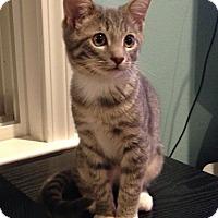 Adopt A Pet :: Patty - LaGrange, KY