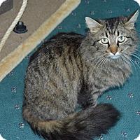 Adopt A Pet :: Rowena - Richmond, VA