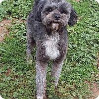 Adopt A Pet :: **BILBO - Peralta, NM