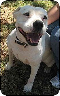 American Pit Bull Terrier Mix Dog for adoption in Blanchard, Oklahoma - Sunny