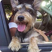 Adopt A Pet :: TUCKER - Houston, TX