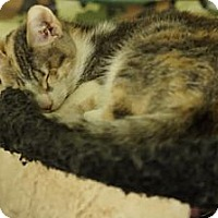 Adopt A Pet :: Ginger - San Diego, CA