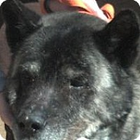 Adopt A Pet :: Hercules -- COURTESY POST - East Amherst, NY