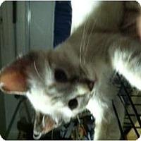 Adopt A Pet :: Pearl - Clay, NY