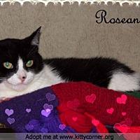 Adopt A Pet :: Roseanna - Liverpool, NY