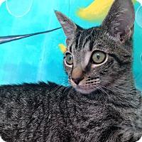 Adopt A Pet :: Ducky - Newport Beach, CA