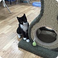 Adopt A Pet :: Emery - Speonk, NY