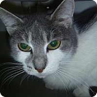 Adopt A Pet :: Silver Lee - Hamburg, NY