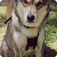 Adopt A Pet :: Layla-Adoption Pending - Fredericksburg, VA