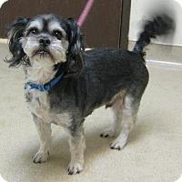 Adopt A Pet :: Kingston - Gary, IN