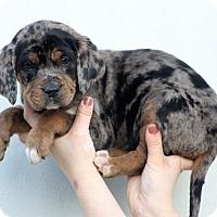 Adopt A Pet :: Bertha - Starkville, MS