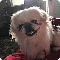 Adopt A Pet :: PAYTON - SO CALIF, CA