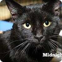Adopt A Pet :: Midnight - Springfield, PA