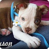 Adopt A Pet :: Tyson - Anaheim Hills, CA