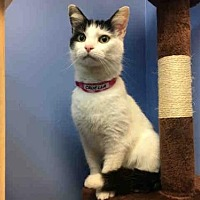 Adopt A Pet :: CRUELLA - Canfield, OH
