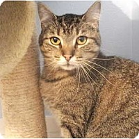 Adopt A Pet :: Leelow - Edwardsville, IL