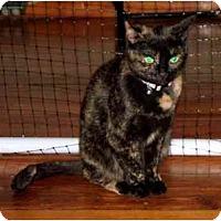 Adopt A Pet :: Remmy - Alexandria, VA