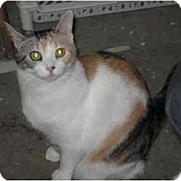 Adopt A Pet :: Presley - Jeffersonville, IN