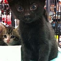 Adopt A Pet :: Nellie - Reston, VA